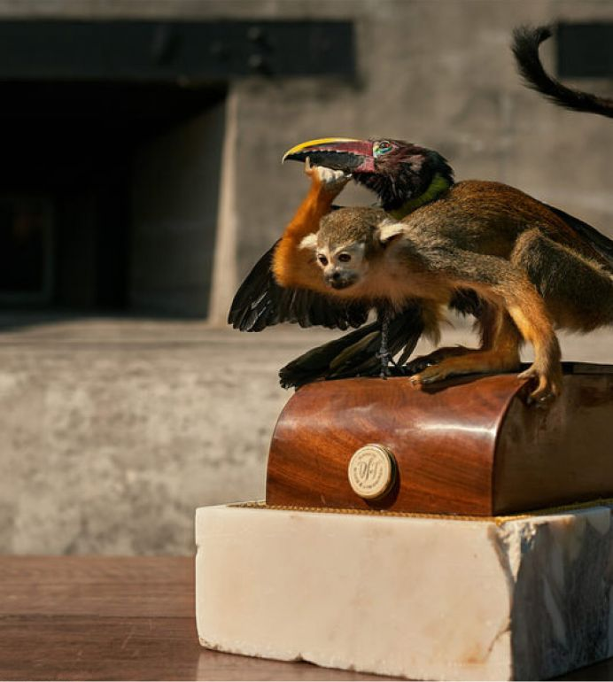 jamb taxidermy